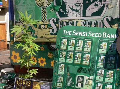 Cannabis seeds sold in Amsterdam